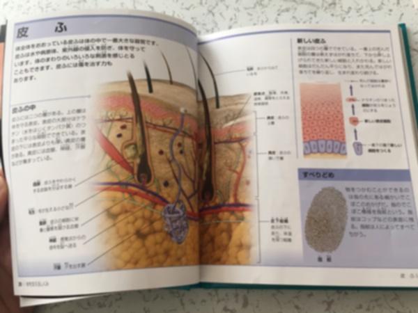 人体 絵本